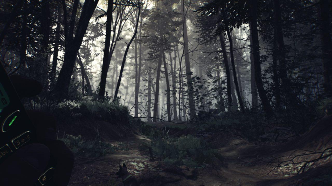 Blair Witch Burkittsville Forest