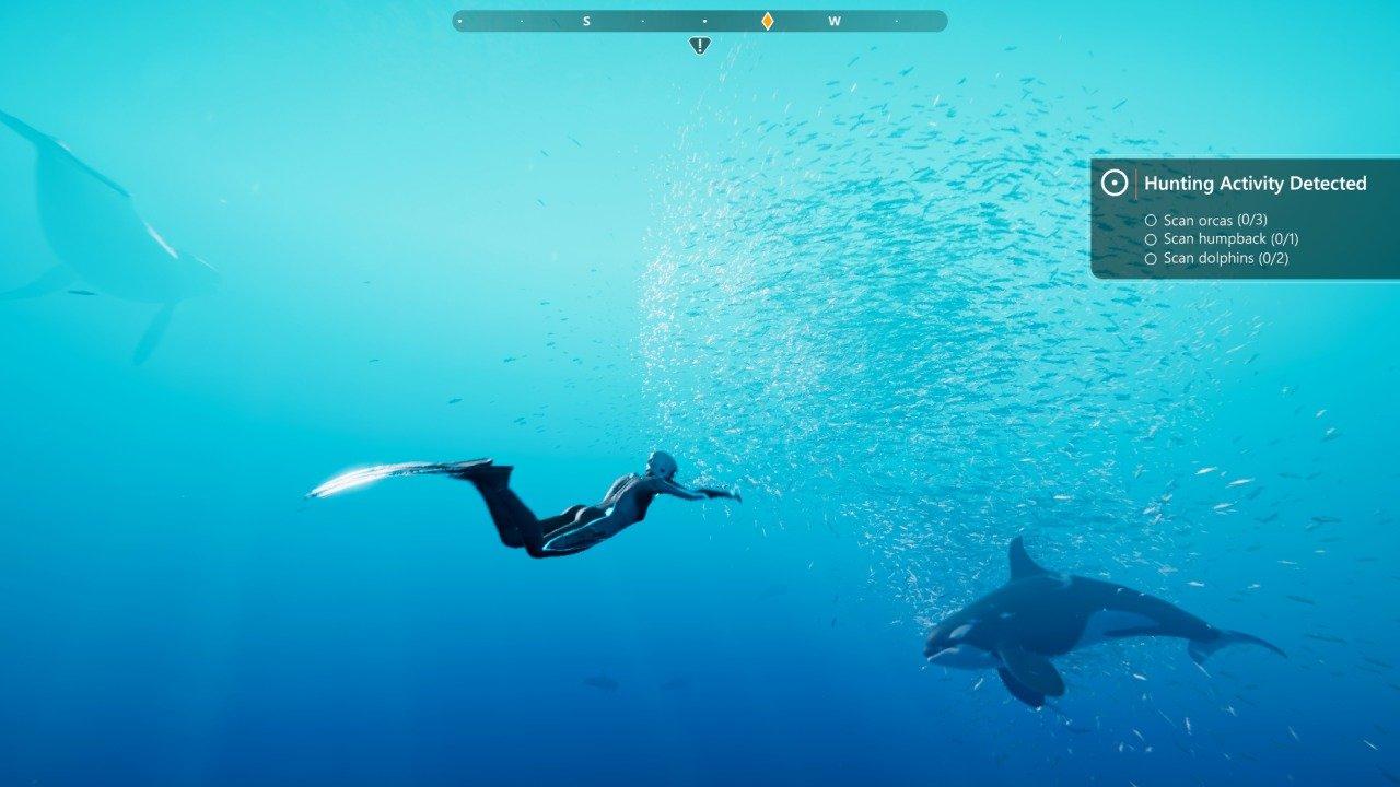 Orcas Feeding on Fish